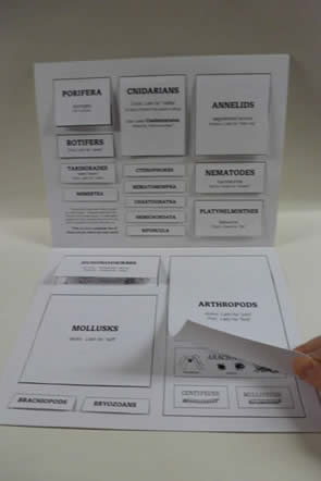 ClassificationFlipChart2