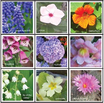 FlowerFlipForTitlePageOnWebSite