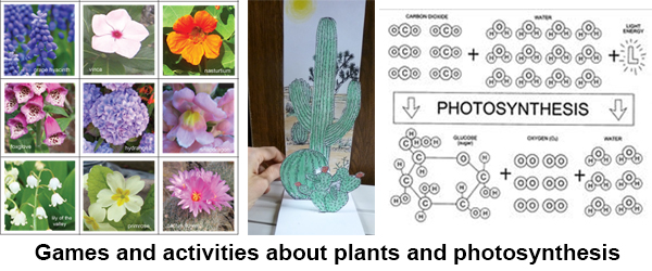 Slideshow_plants