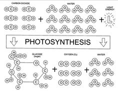photosynthesis game pic black and white