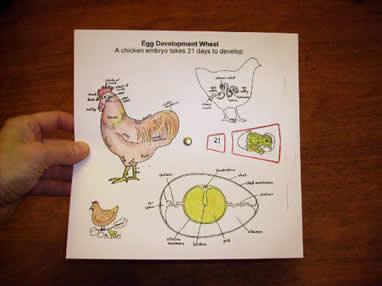 eggwheelinlefthand.jpg.w560h420