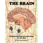 BrainCoverForWebstore