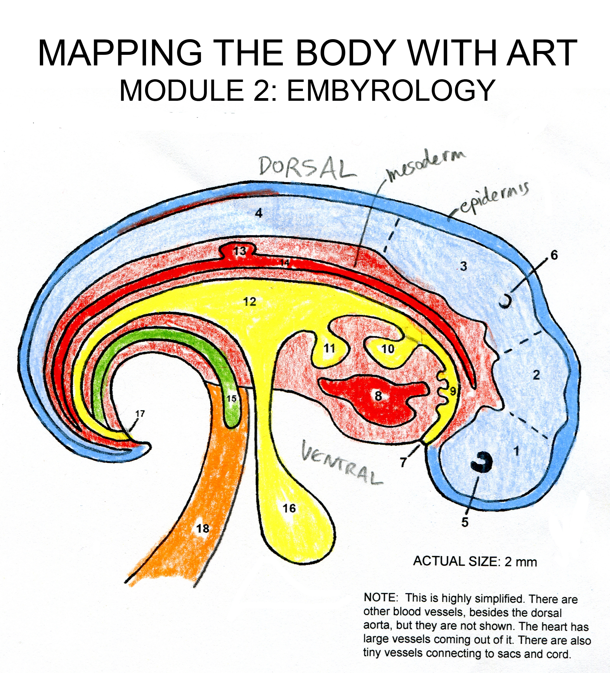 FREE: Mapping the Body with Art VIDEO E-COURSE (Part 2